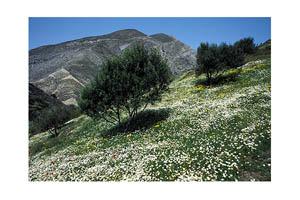 Mountains around Olympos in springtime