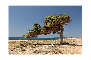 "Formed by the aegean wind ""Meltemi"" - Karpathos, Greece"